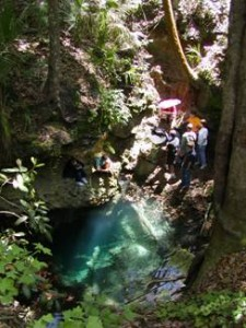View down into Apopka Blue Sink
