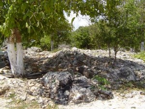 Soil is nearly absent in karst areas of Yucatan