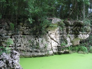 The steep bluff of porous karst at Orange Grove Sink is a common geological feature of offset sinks