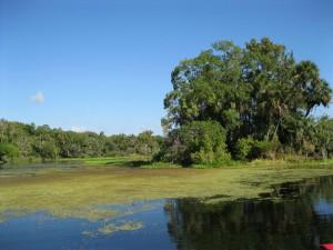 Island Spring, Wekiva River, FL