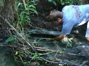 Cambrian Foundation intern Steve Dunn collects a water sample adjacent to a spring on the Little Wekiva River.