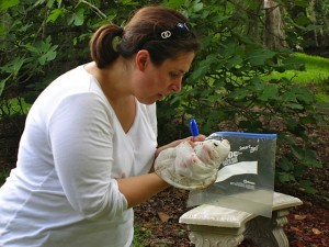 Dr. Rima Franklin examines bacterial specimens from a local spring.